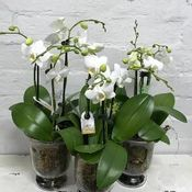 Hampers, Gifts & Plants