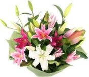 Pink and white oriental lilies